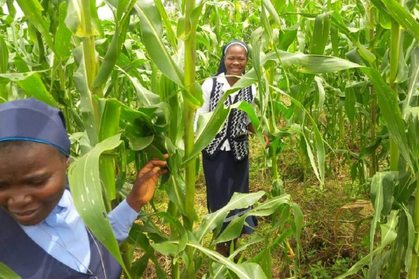 SLDI participants in Nigeria explore the maize fields at Pastor Usman's