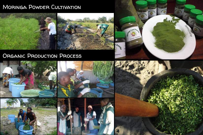 Cultivation and processing of Moringa powder at Mother Earth Centre in Mongu, Zambia. Sr. Eulalia Capdevilla Enriquez, CMS, has used the skills she's learned through SLDI to be a leader at the Centre.