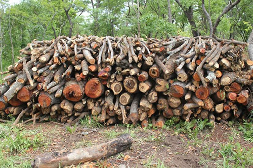 Cutting down trees for chacoal and other uses leaves a big impact to the environment, climate change, and carbon emissions.