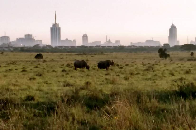 Rhinos graze in a field against the backdrop of the Nairobi skyline.
