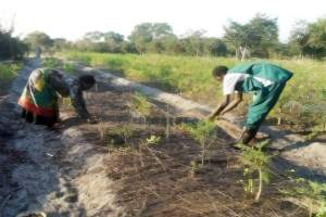 Eco-friendly farming with renewable energy in rural Zambia