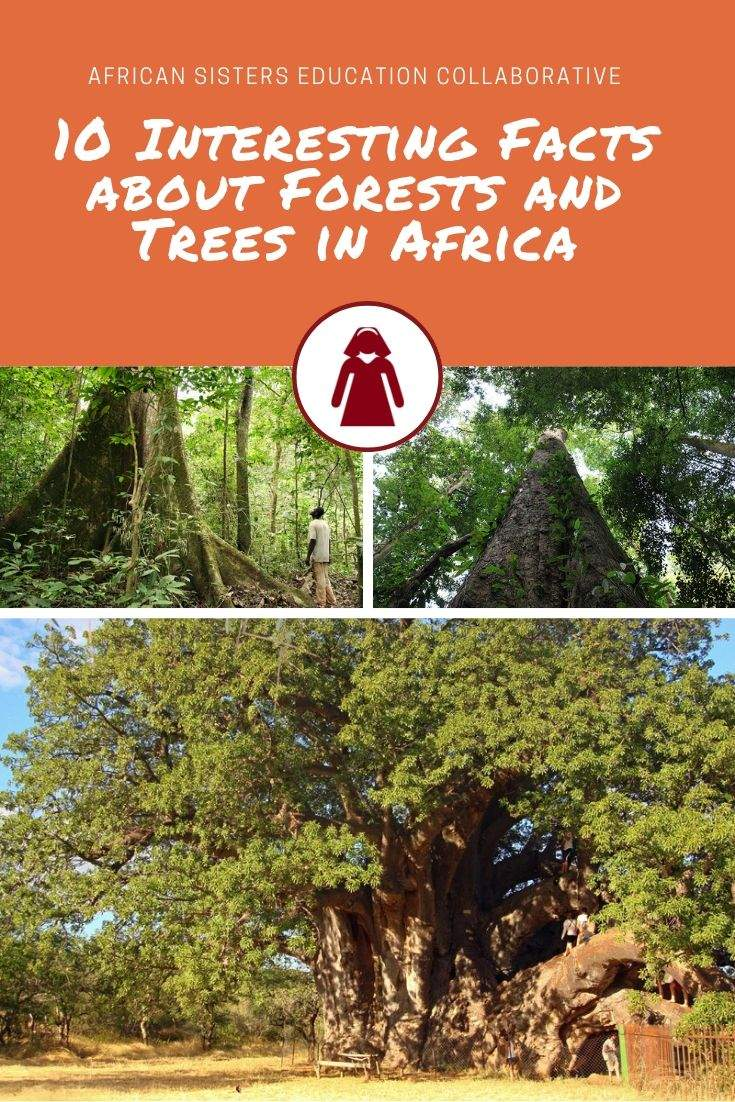 10 Interesting Facts about Forests and Trees in Africa
