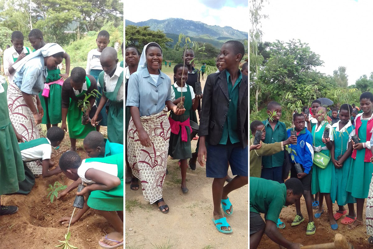 142 students of Ntcheu Roman Catholic Primary School, Malawi, are planting trees in Africa.