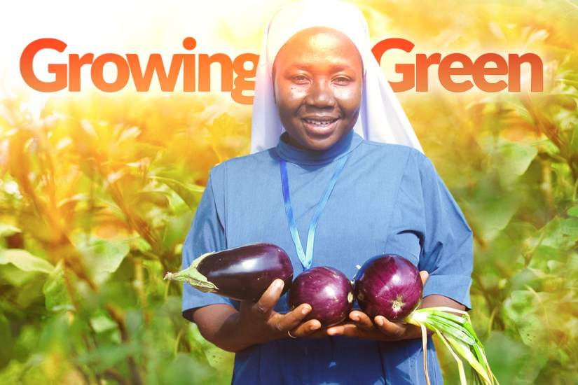 Catholic sisters share their creative farming and agro-business solutions like; mushroom farming in small spaces, community agriculture training programs and the use of sustainable energy sources, like biogas, in their agriculture projects.
