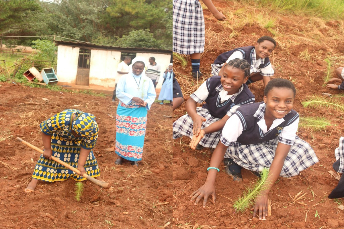 Students and sisters planting pine trees together.