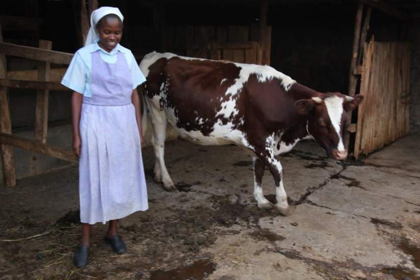 This Assumption Sisters dairy farming project at Thika Farms is directed by SLDI alumna Sr. Susan Wanjiru. Fifteen cows produce 15 liters of milk per day and the manure used to add nutrients into the soil.