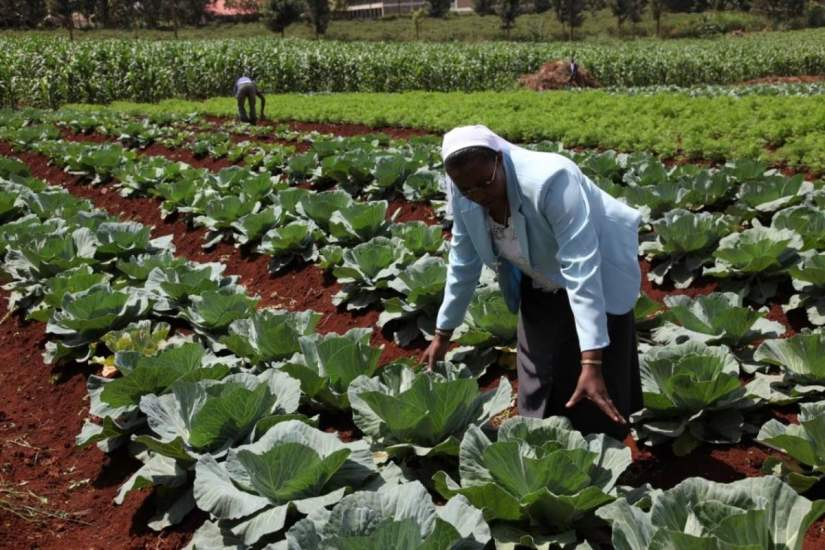 Sr. Susan demonstrates the use of drip irrigation to produce vegetables – carrots, corn, banana plants and tomatoes at the Thika Farm (photo courtesy of Professor Donald Miller, USC).