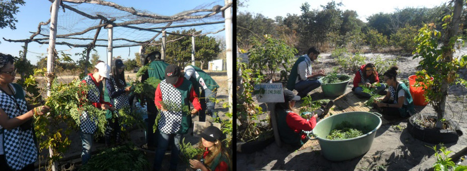 Students of the University of Monterry, Mexico visited Mother Earth to learn about the process and benefits of Moringa.