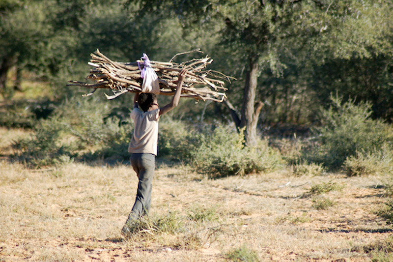 Forests can be used for lumbering, which can provide income to that country.