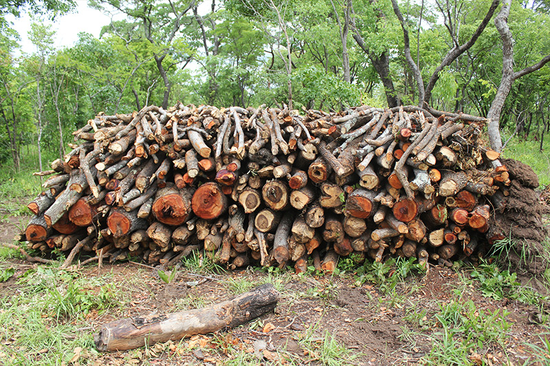Deforestation is affecting Africa at twice the world rate.