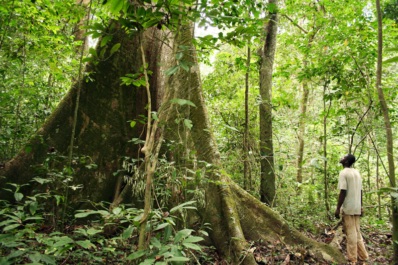 The Central African country of Gabon is known for its biodiverse rainforests.