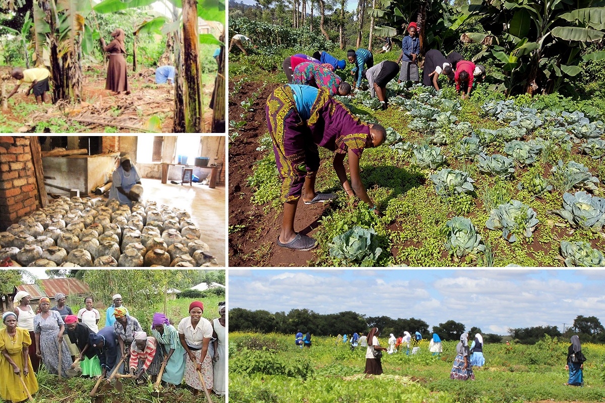 Sustainable Agriculture in rural Africa